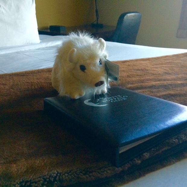 Stuffed animal greeting in my White Buffalo Club hotel room