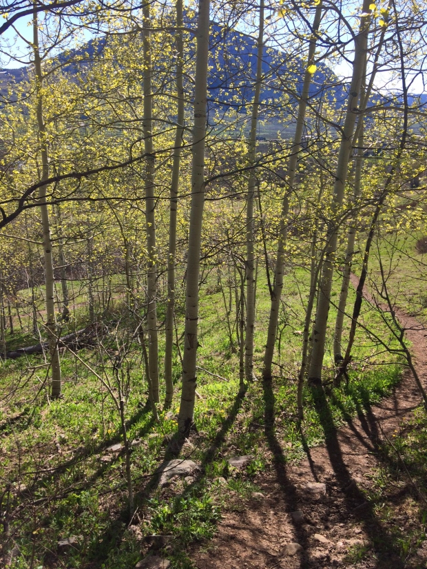 View through the Aspens, Lower Loop Trail, Crested Butte, Colorado